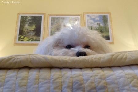 DIY Upholstered Headboard - Puddy Watching