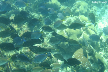 Vacation - Belize snorkeling fish