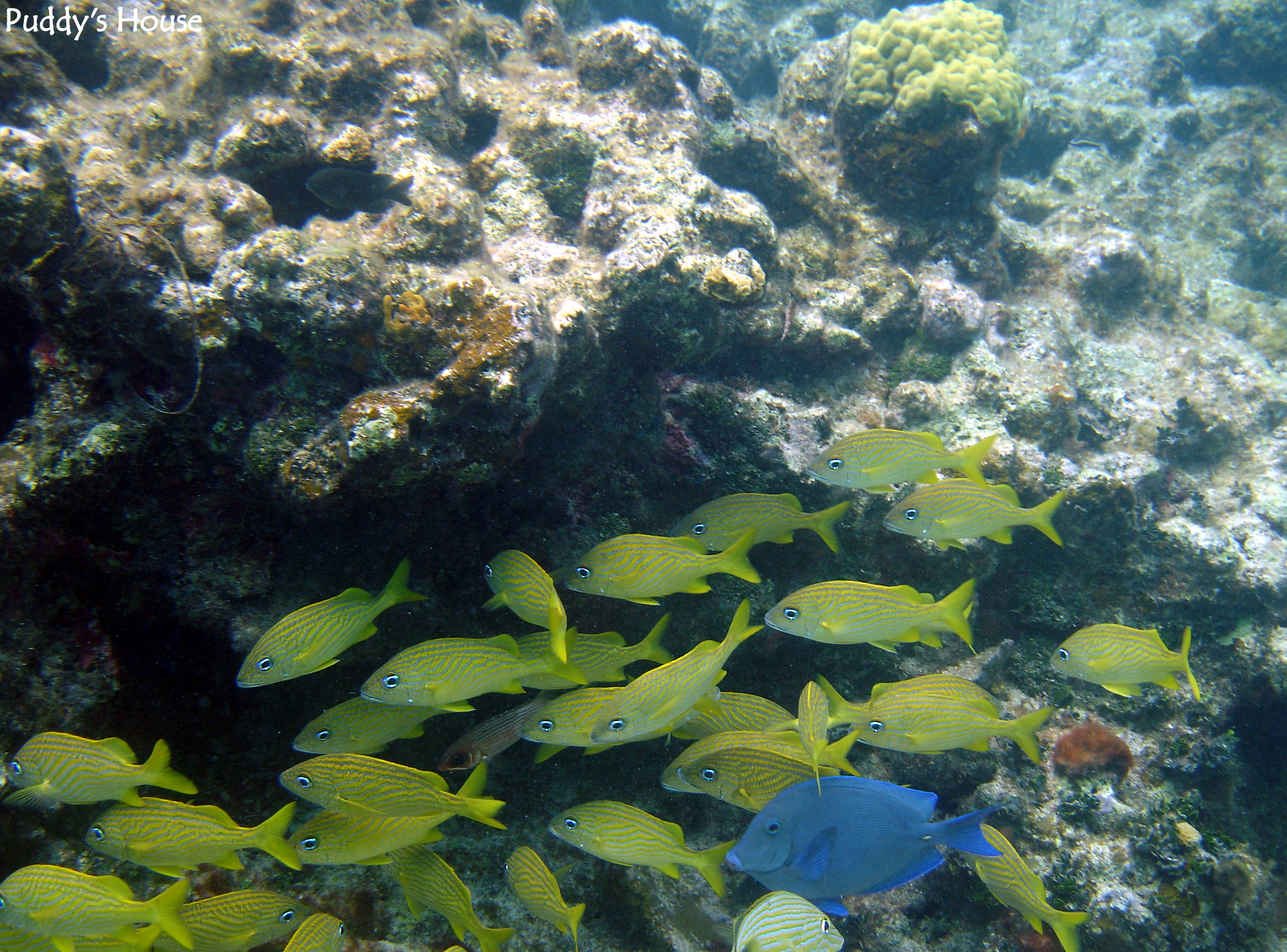 Displaying 17> Images For - Snorkeling Fish...