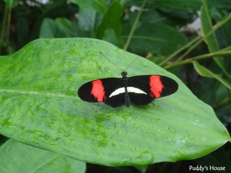 Vacation - St Marteen - butterfly farm