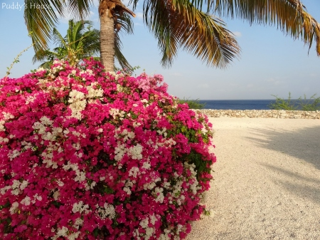 Curacao 2 - Flowers and palm tree with water in background
