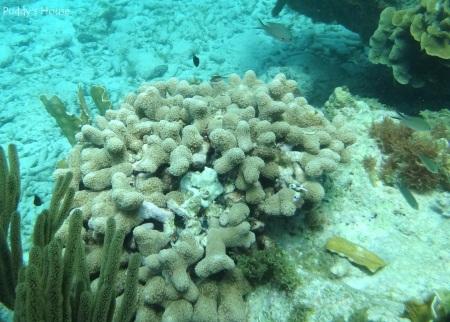 Curacao 2 - Snorkeling coral varieties