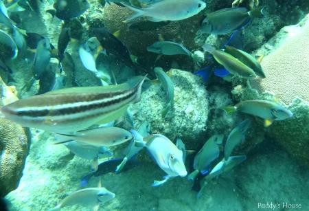 Curacao 2 - snorkeling - fish