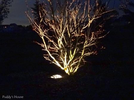 DIY Landscape Lights - crape myrtle 2 at night