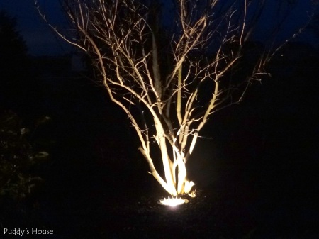 DIY Landscape Lights - crape myrtle at night