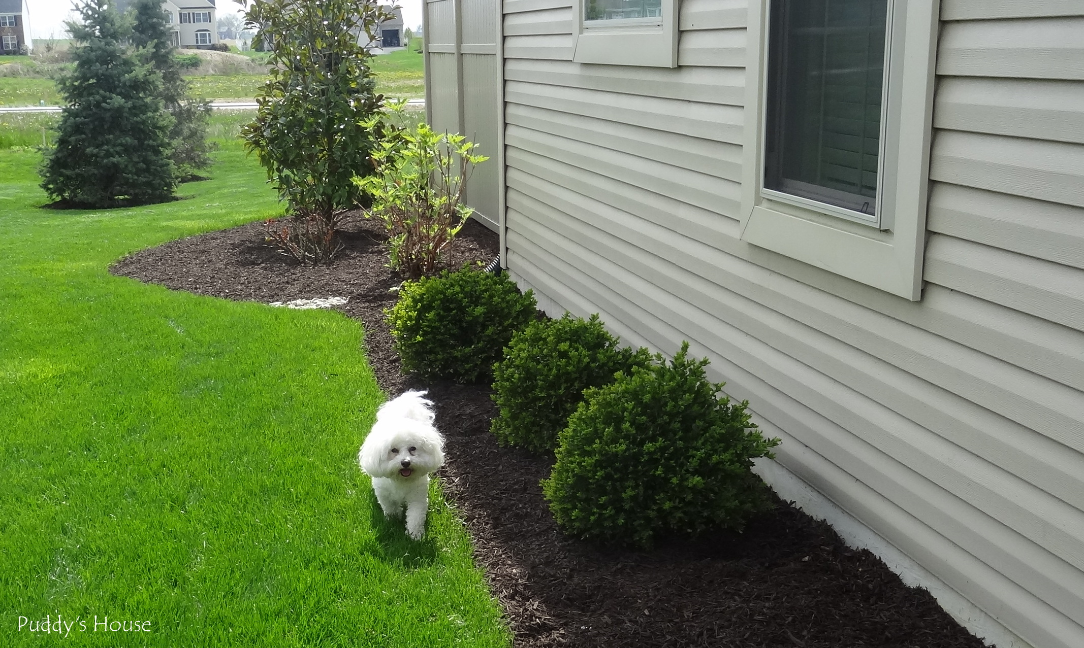 Idea Lanscaping: Diy landscaping on a budget on Cheap Diy Backyard Landscaping Ideas id=56381