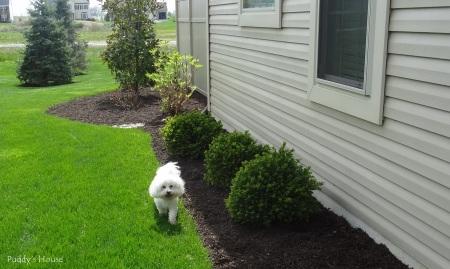 DIY Landscape Lights - Puddy in yard