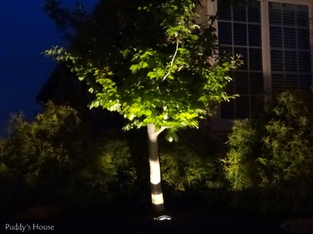 DIY Landscape Lights - Tree close up at night