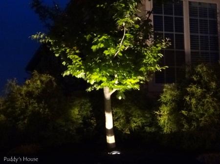 DIY Landscape Lights - Tree close up at night