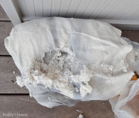 Patio - drop cloth mouse damage