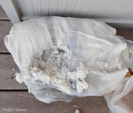 Patio - drop cloth mouse damage