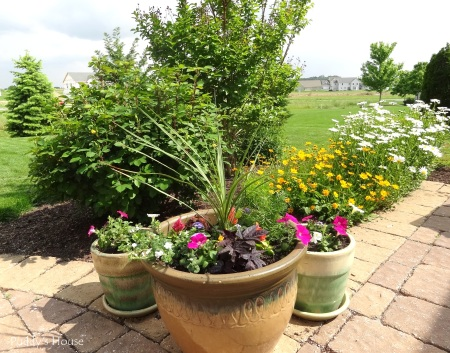 Patio - flower pots and coreopsis and daisies